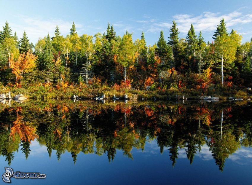 farebný jesenný les, jazero, odraz