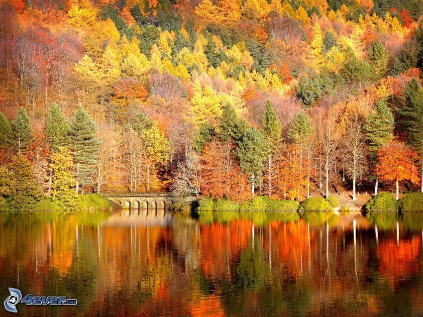 farebný jesenný les, jazero
