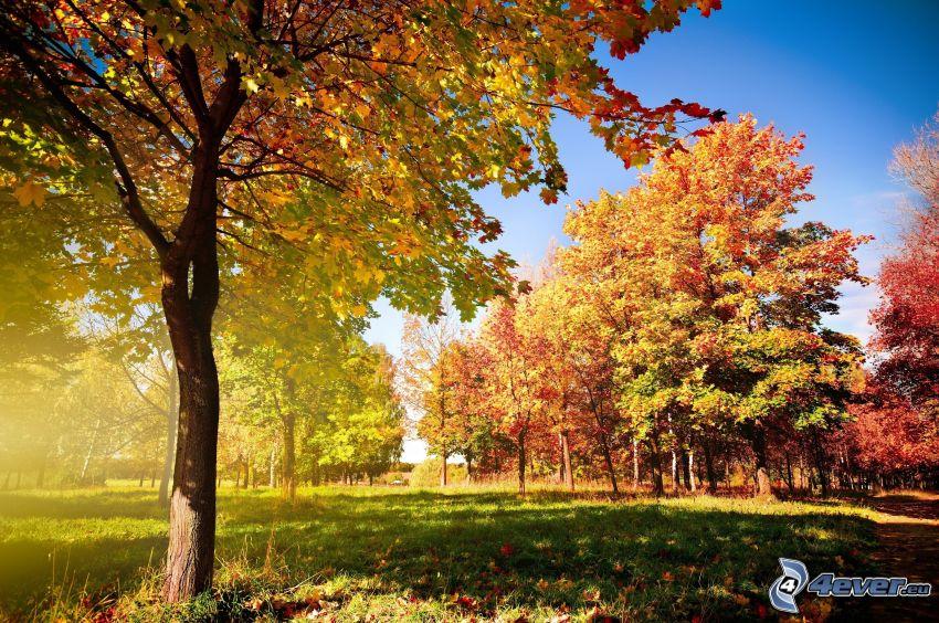 farebný jesenný les