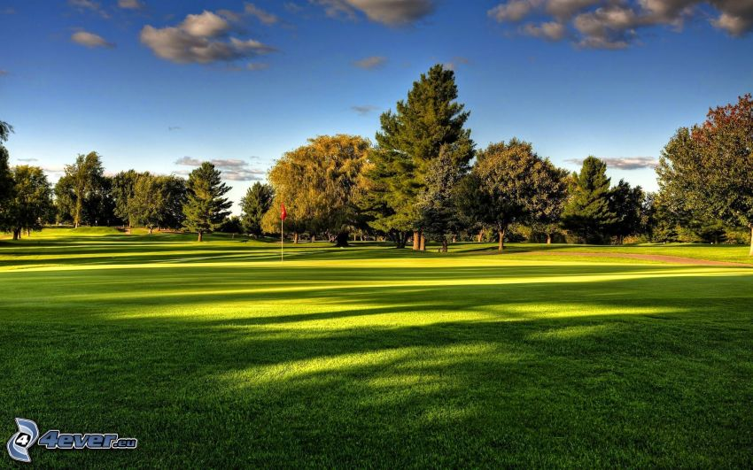 golfové ihrisko, stromy