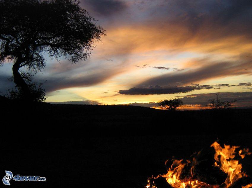 horizont, obloha, silueta stromu, oheň