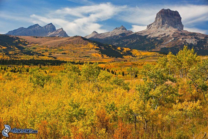 Chief Mountain, žltý jesenný les, skalnatá hora