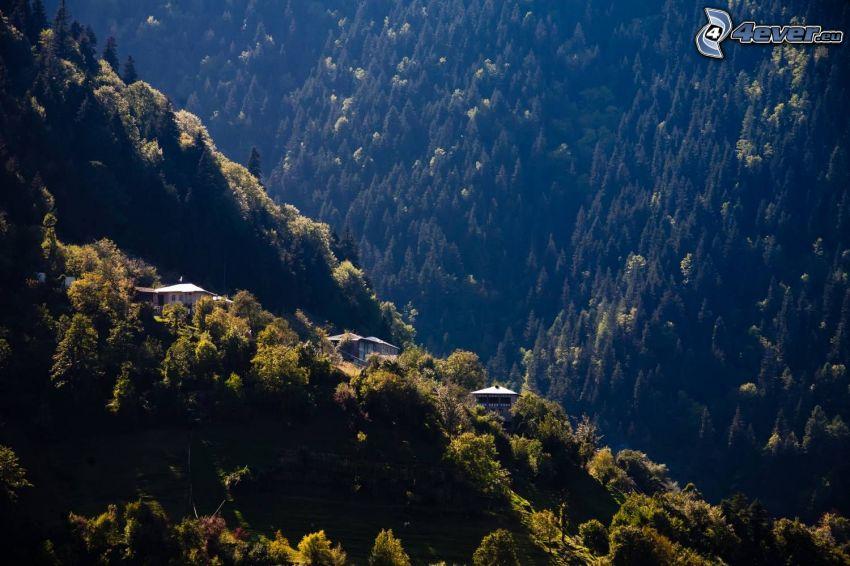 domy, kopce, ihličnaté stromy