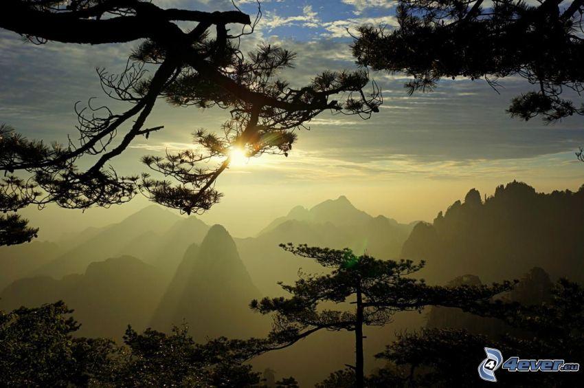 Huangshan, skalnaté hory, západ slnka nad horami, ihličnaté stromy