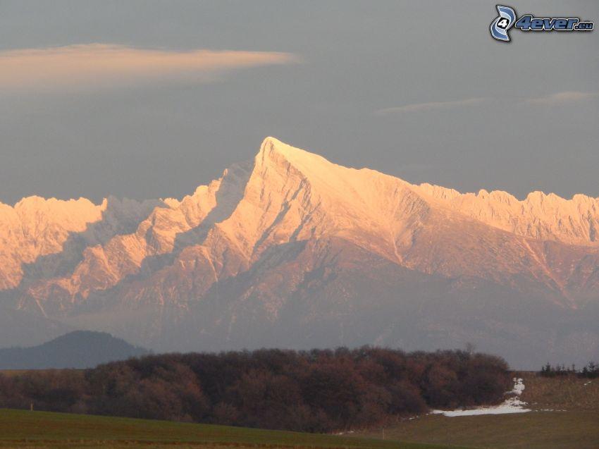 Kriváň, Vysoké Tatry, Slovensko, zasnežené hory, stromy