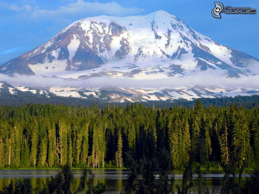 Mount Adams, zasnežená hora, ihličnatý les