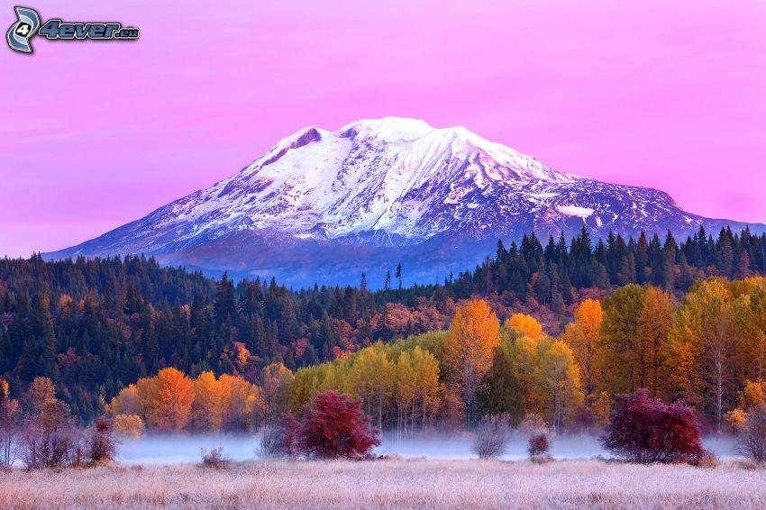 Mount Adams, zasnežená hora, jesenný les, fialová obloha