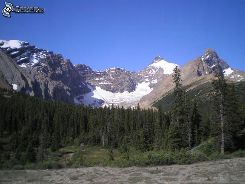 Mount Athabasca, skalnaté hory, ihličnatý les