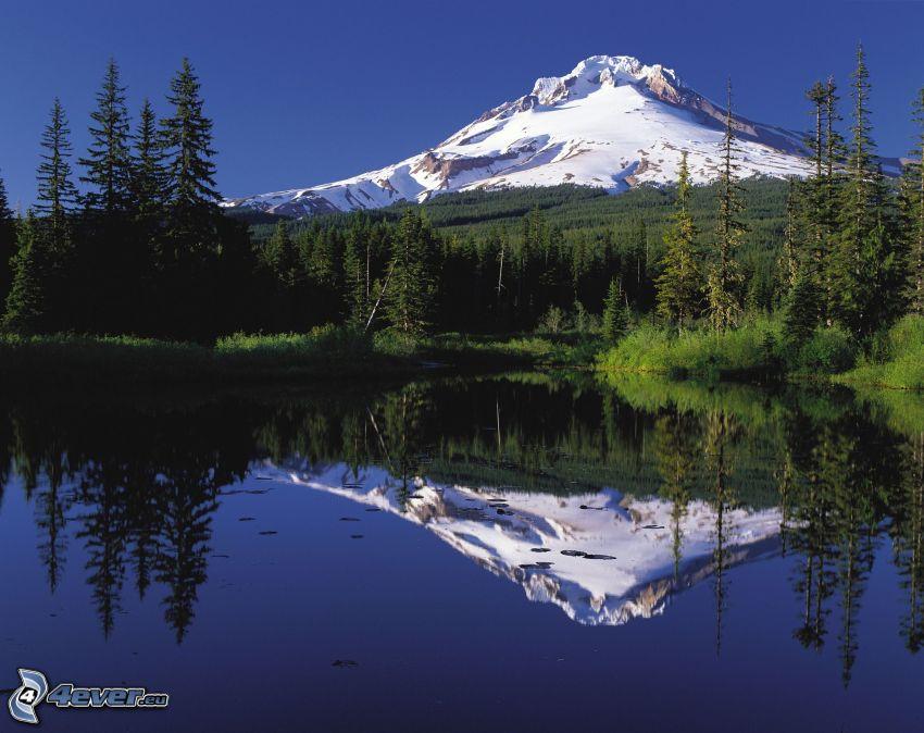 Mount Hood, zasnežená hora, les, jazero, odraz