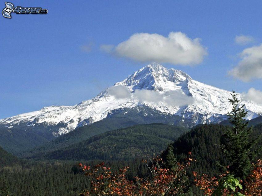 Mount Hood, zasnežená hora, les