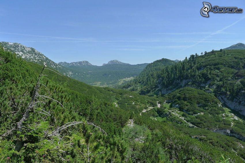 Totes Gebirge, zeleň, údolie