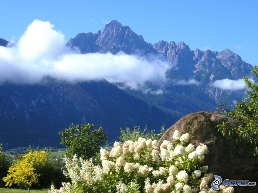 veľhory, biele kvety, oblaky, Rakúsko