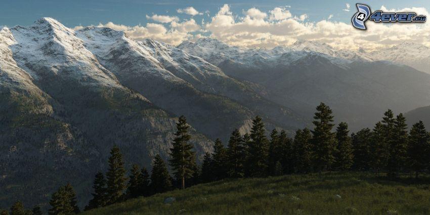 zasnežené hory, ihličnaté stromy