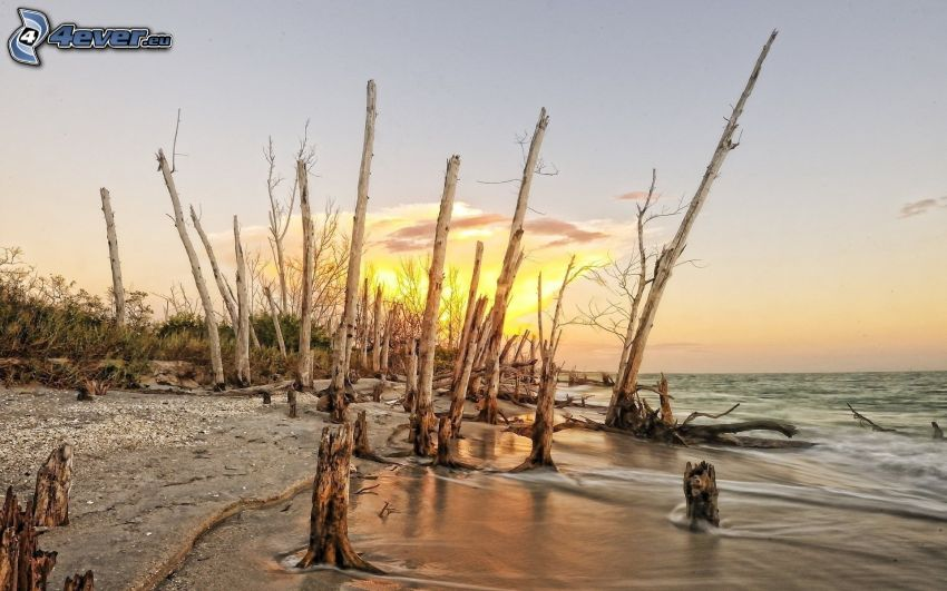 jazero, drevo, východ slnka, HDR
