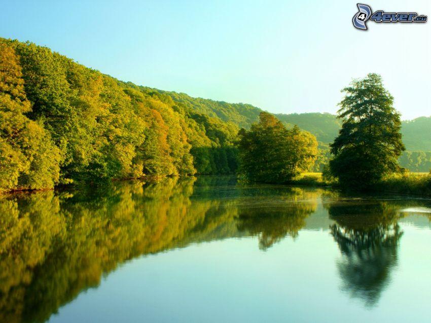 jazero, pokojná vodná hladina, les, odraz