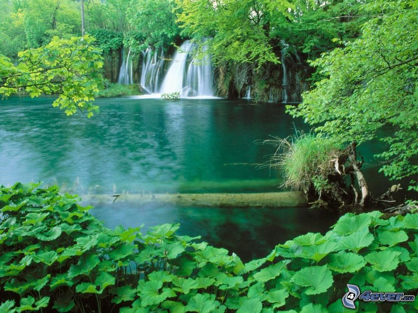 jazero v lese, vodopády, zeleň, stromy