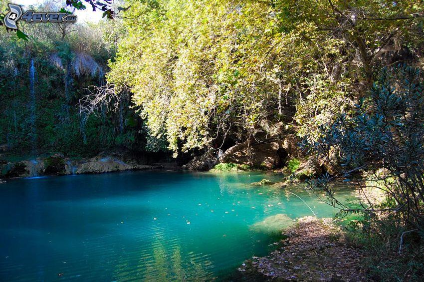 jazero v lese, zelená voda, stromy