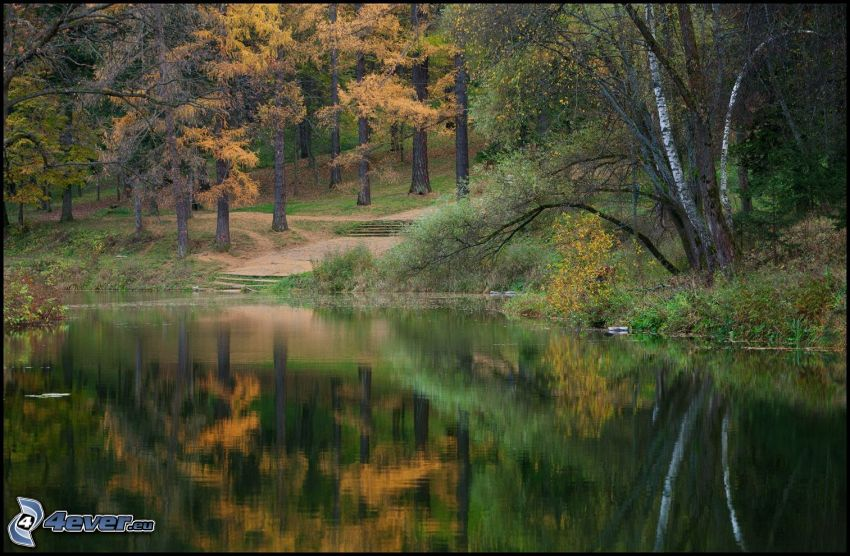 jazero v lese, žlté stromy