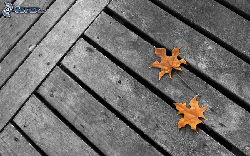 jesenné listy, drevo