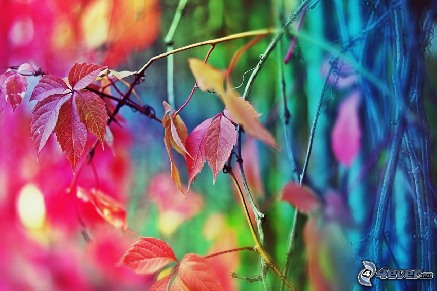 jesenné listy, konáre