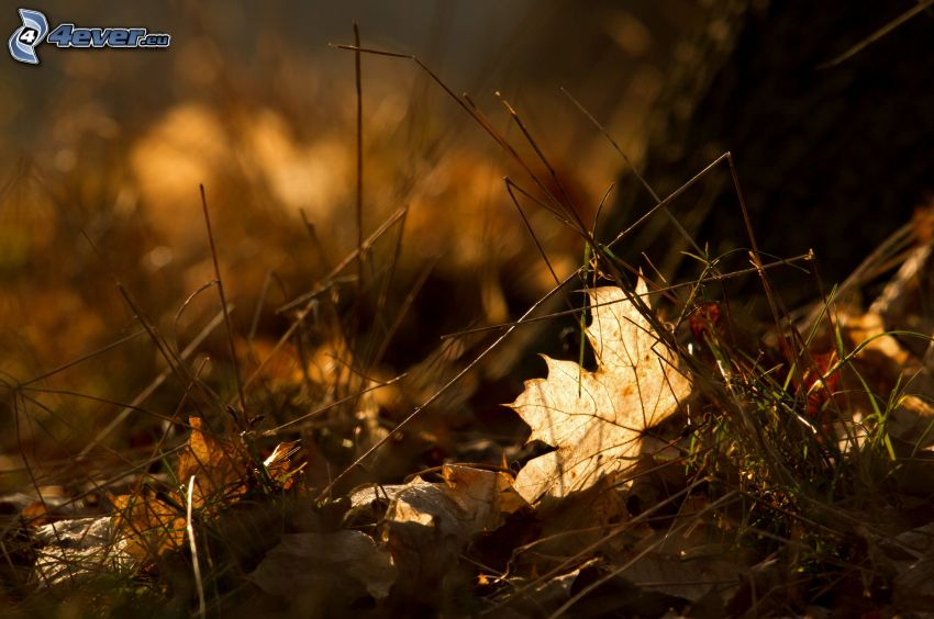 jesenné listy, tráva