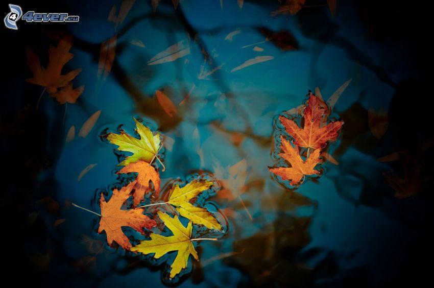 jesenné listy, voda