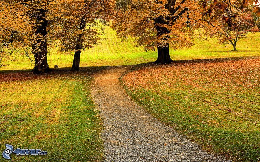 jesenné stromy, jesenné listy, cestička