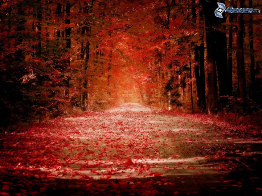 jesenný červený les, cesta lesom
