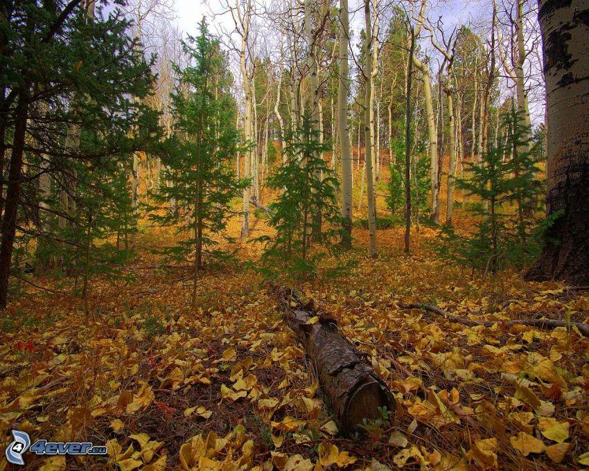 jesenný les, jesenné listy