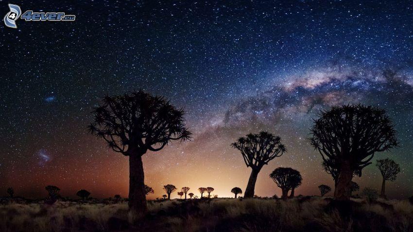 Joshua Tree National Park, baobaby, nočná obloha, hviezdna obloha