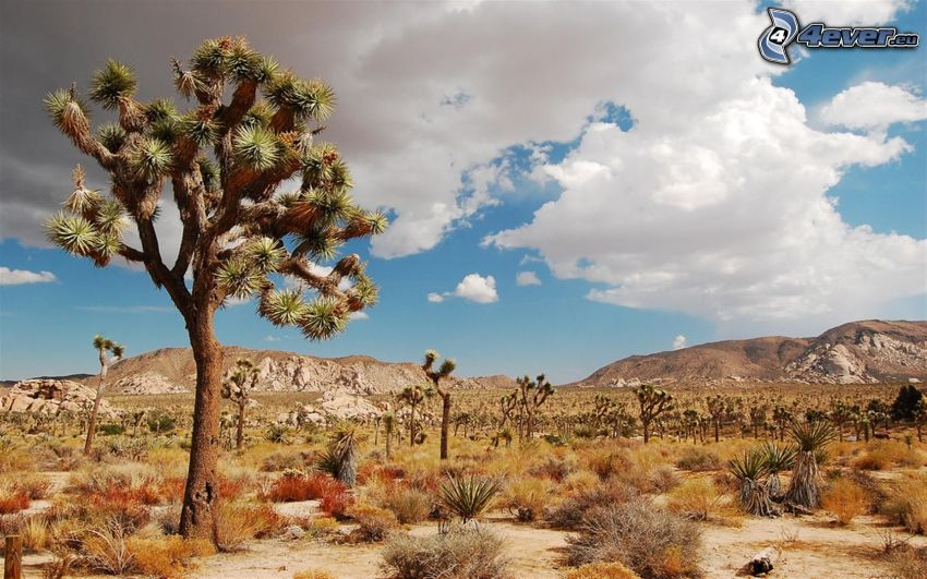 Joshua Tree National Park, skaly, oblaky