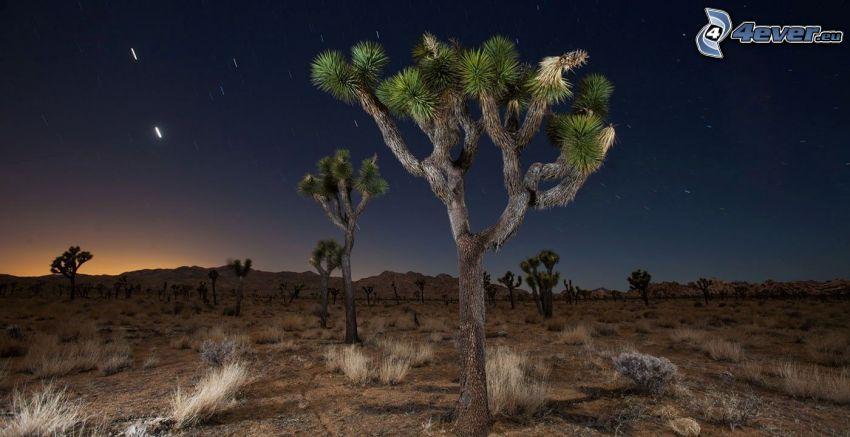 Joshua Tree National Park, stromy, nočná obloha