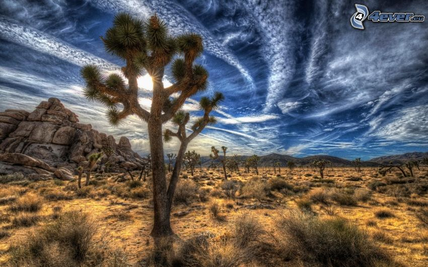 Joshua Tree National Park, stromy, oblaky, HDR