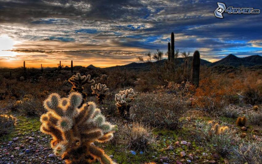 kaktusy, východ slnka