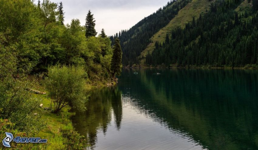 Kolsai Lakes, stromy
