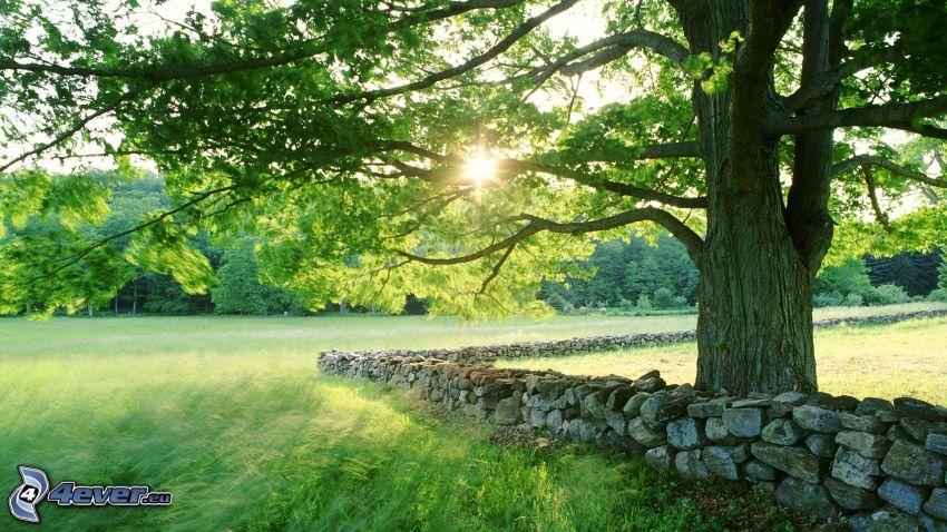 košatý strom, kamenný múr, lúka, západ slnka za stromom