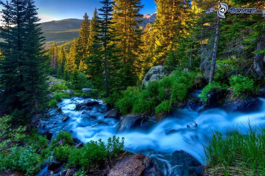divoký lesný potok, ihličnatý les, HDR