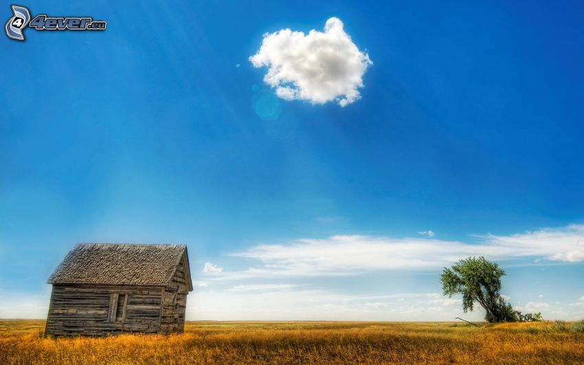 drevený dom, osamelý strom, oblak, modrá obloha, žltá tráva