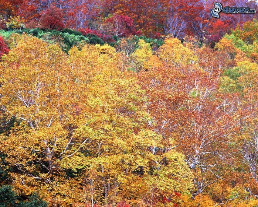 farebný jesenný les, stromy, žlté lístie