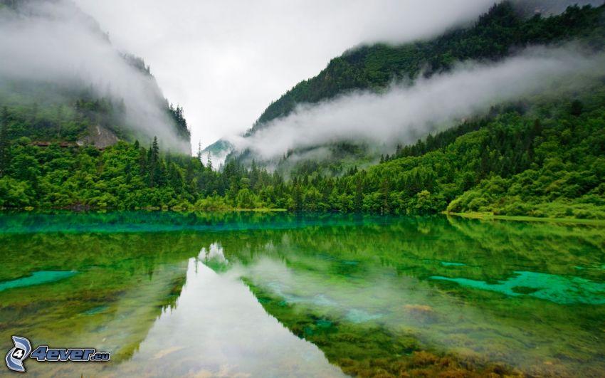jazero v lese, kopce, odraz, oblaky, zeleň