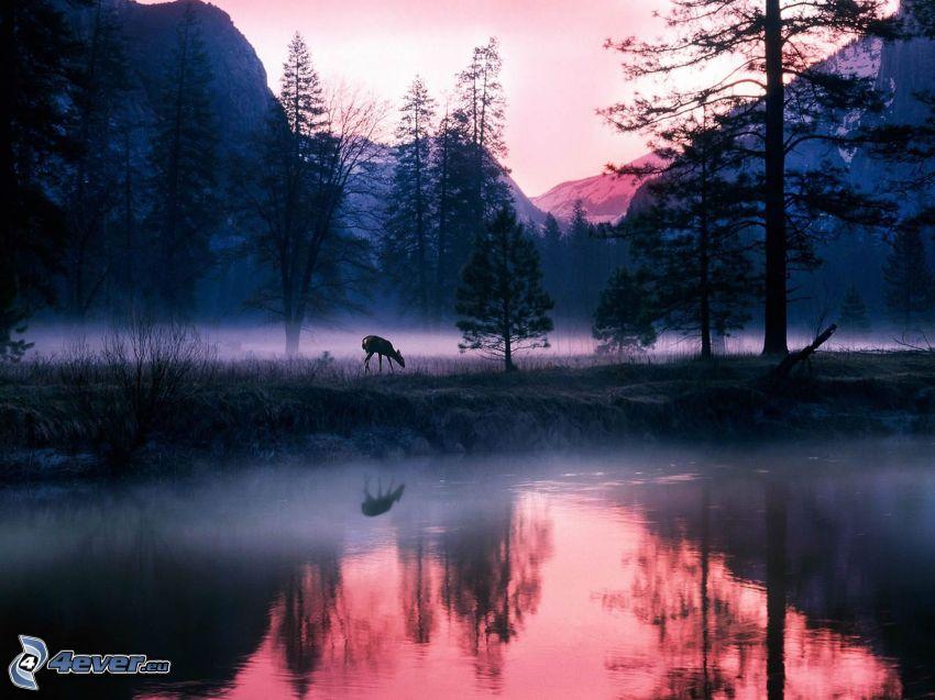 krajina, rieka, srnka, stromy, prízemná hmla, hory
