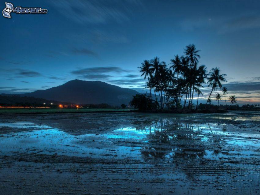 Malajzia, palmy, siluety, večer