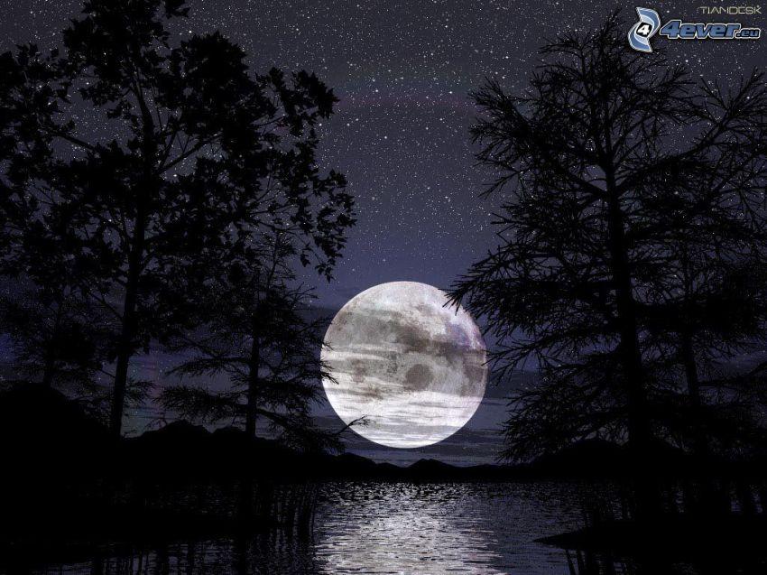 mesiac nad hladinou, jazero v lese, nočný les, hviezdna obloha
