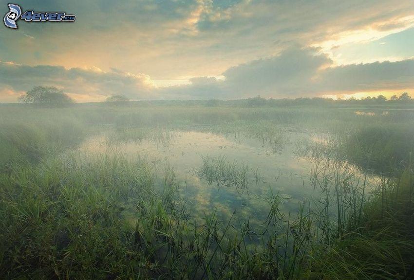 močiar, západ slnka, vysoká tráva, hmla