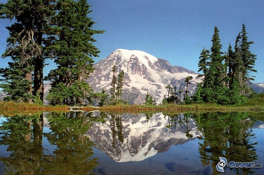Mount Rainier, zasnežená hora nad jazerom, ihličnaté stromy, odraz