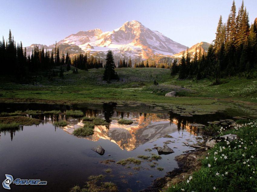 Mount Rainier, zasnežená hora nad jazerom, pleso, ihličnaté stromy, odraz