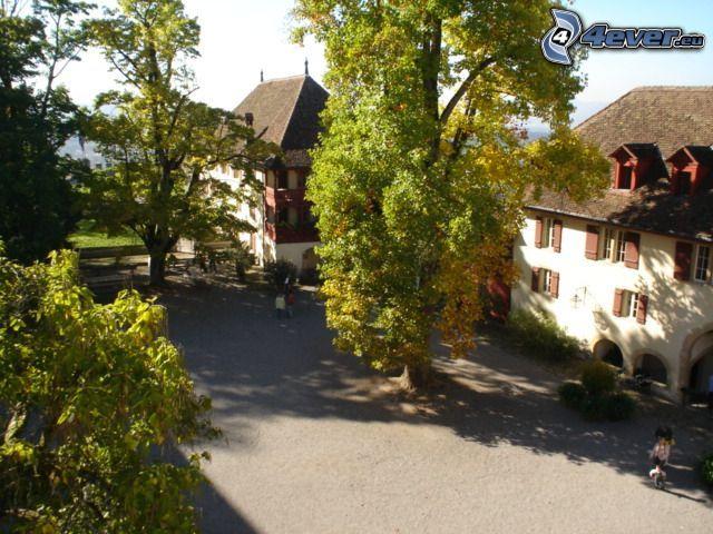 námestie, mohutné stromy, dedinka, domy