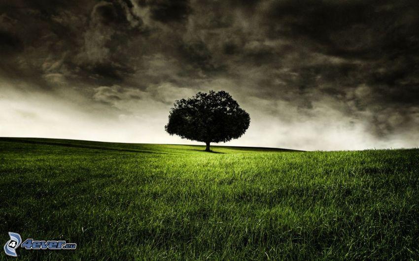 osamelý strom, lúka