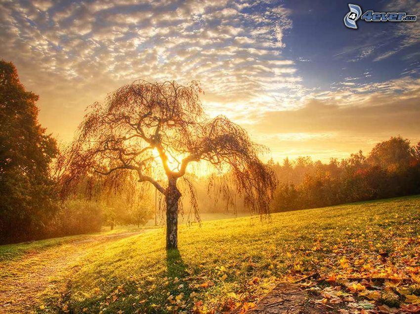osamelý strom, poľná cesta, západ slnka za lúkou, opadané listy