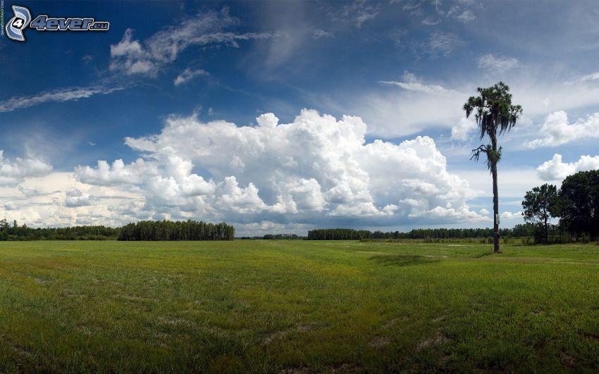 osamelý strom, strom na lúke, oblaky